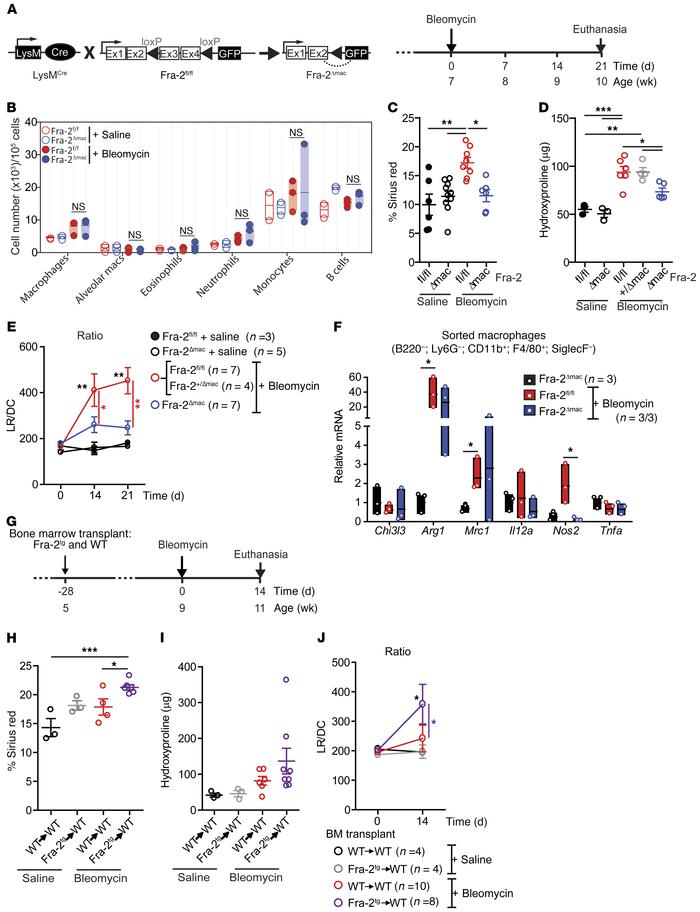Bleomycin-induced lung fibrosis requires Fra-2 expression in macrophages...