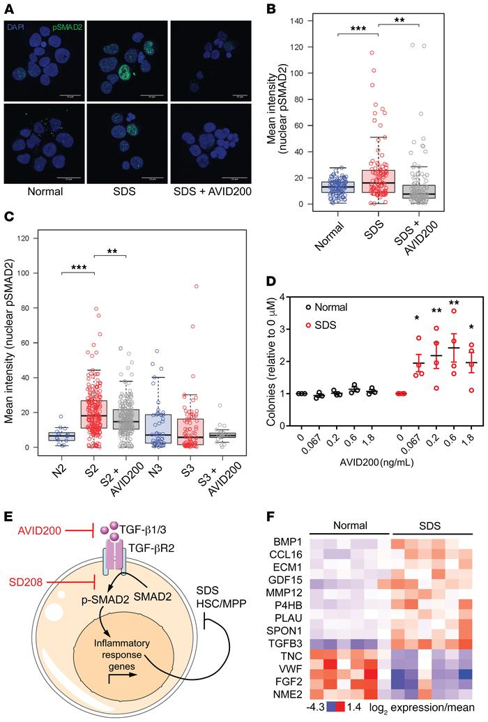 TGF-β pathway activation through TGF-βR1 suppresses hematopoiesis in SDS...