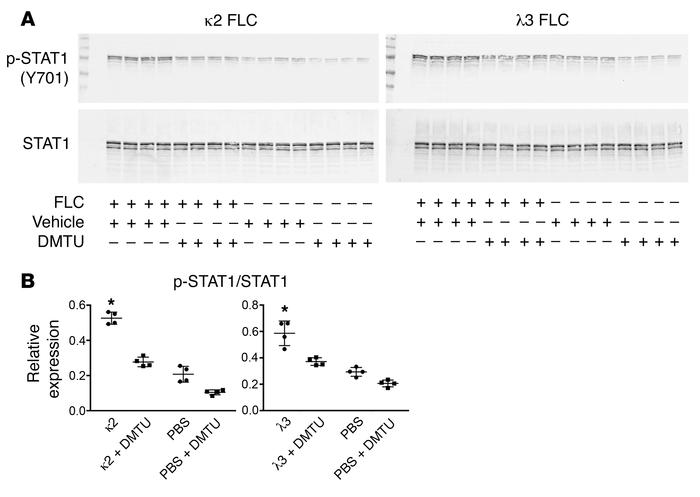 DMTU inhibited the FLC-mediated activation of STAT1 in HK-2 cells. (A an...