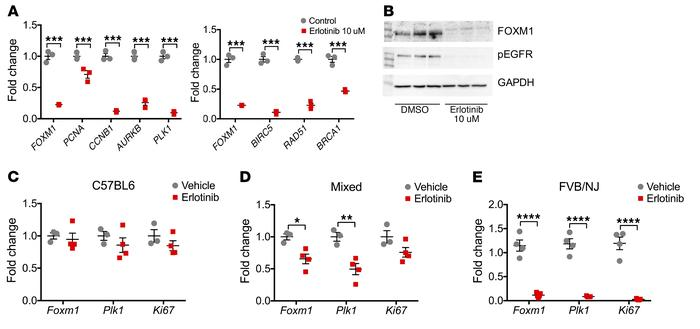 Foxm1 is downstream of the Egfr pathway in tubular epithelial prolifera...