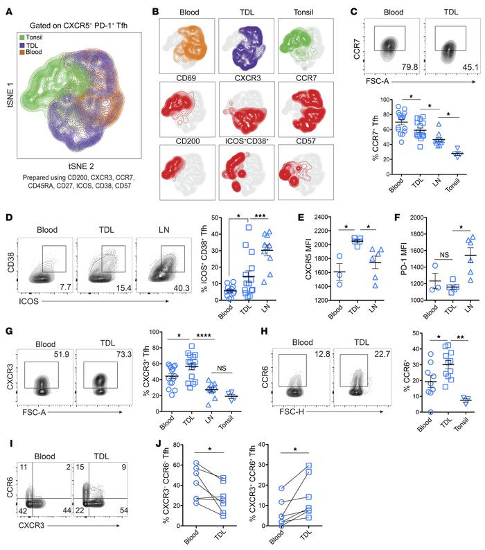 TDL Tfh have an intermediate activation phenotype between LNs and blood,...