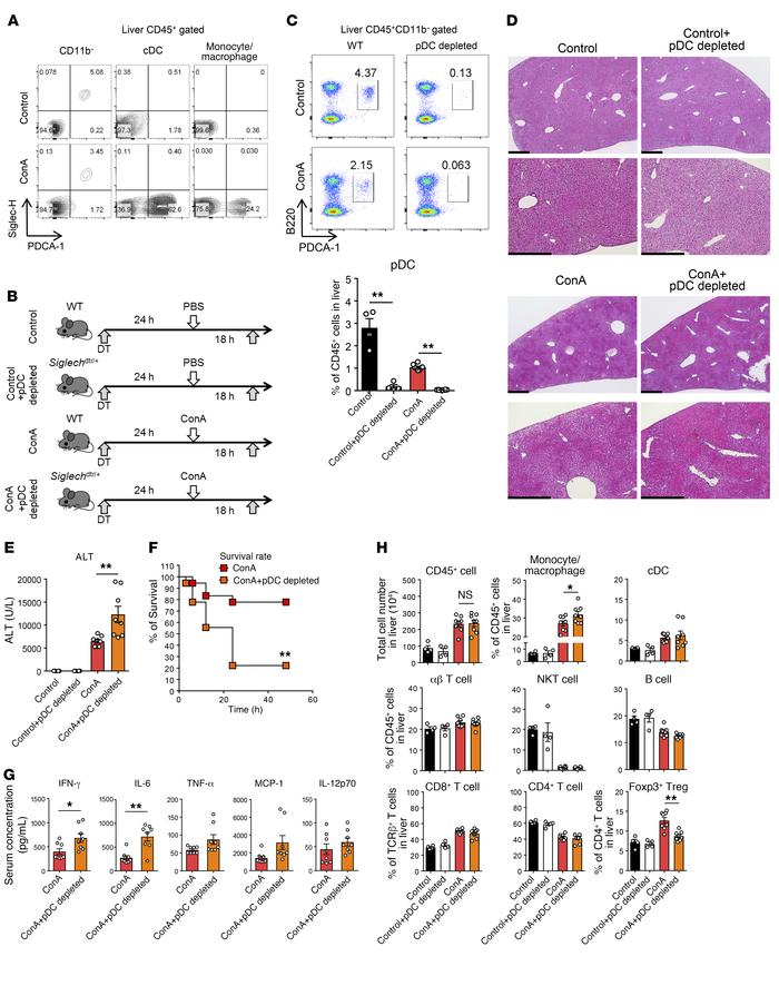 Siglec-H–dependent depletion of pDCs exacerbates ConA-induced inflammati...