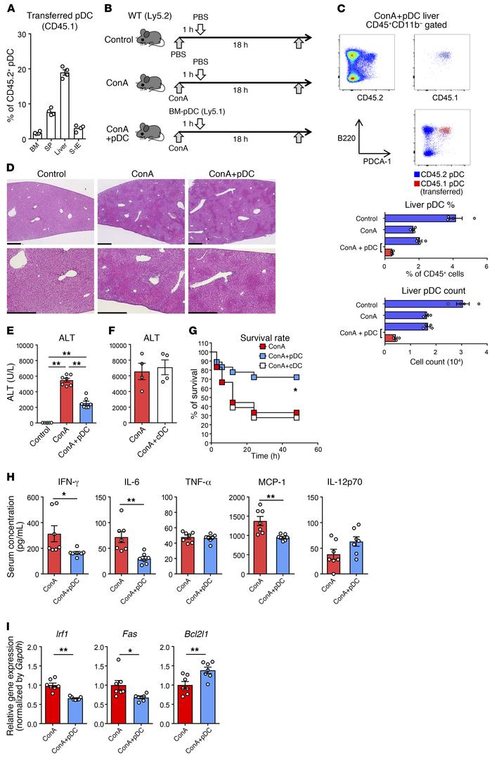 Adoptive transfer of BM-derived pDCs ameliorates ConA-induced inflammati...