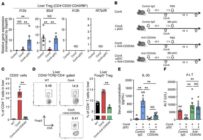 BM-derived pDCs ameliorate ConA-induced inflammation in the presence of ...