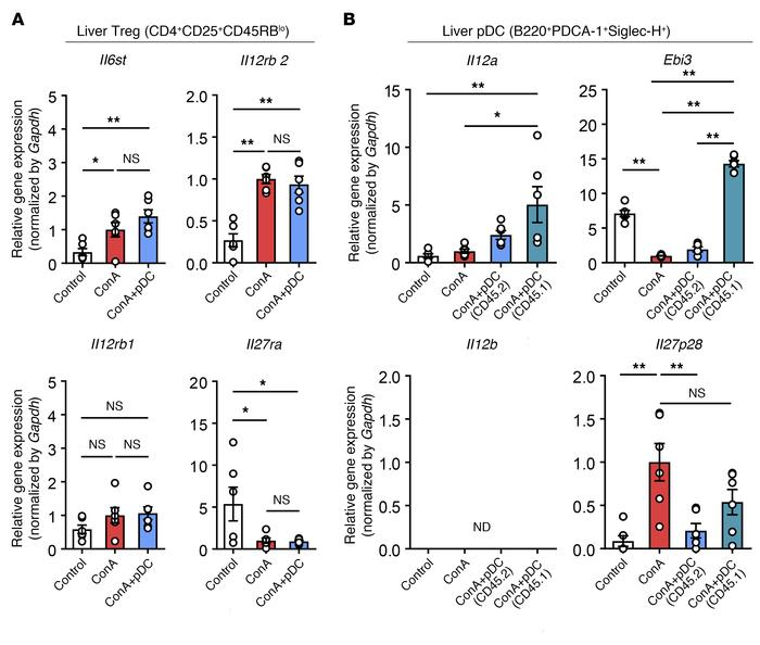 Transferred BM-derived pDCs express IL-35 genes during ConA-induced infl...