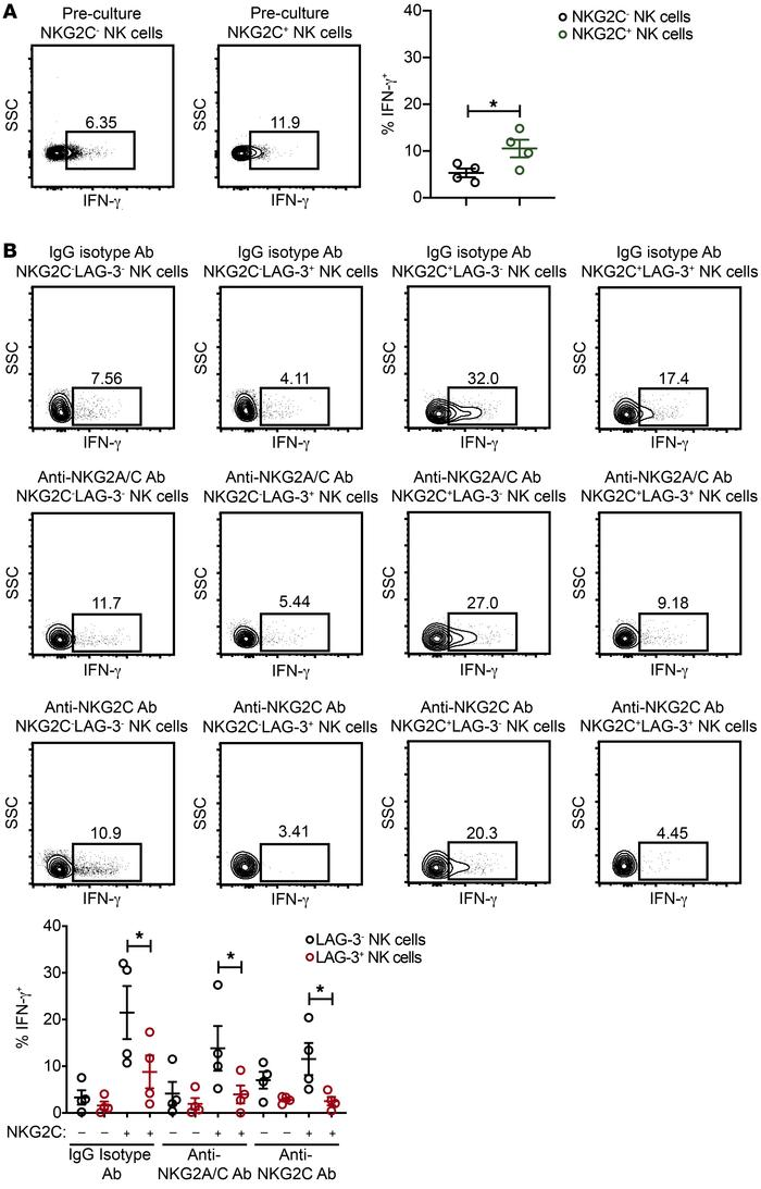 Chronically stimulated adaptive NK cells expressing LAG-3 exhibit impair...