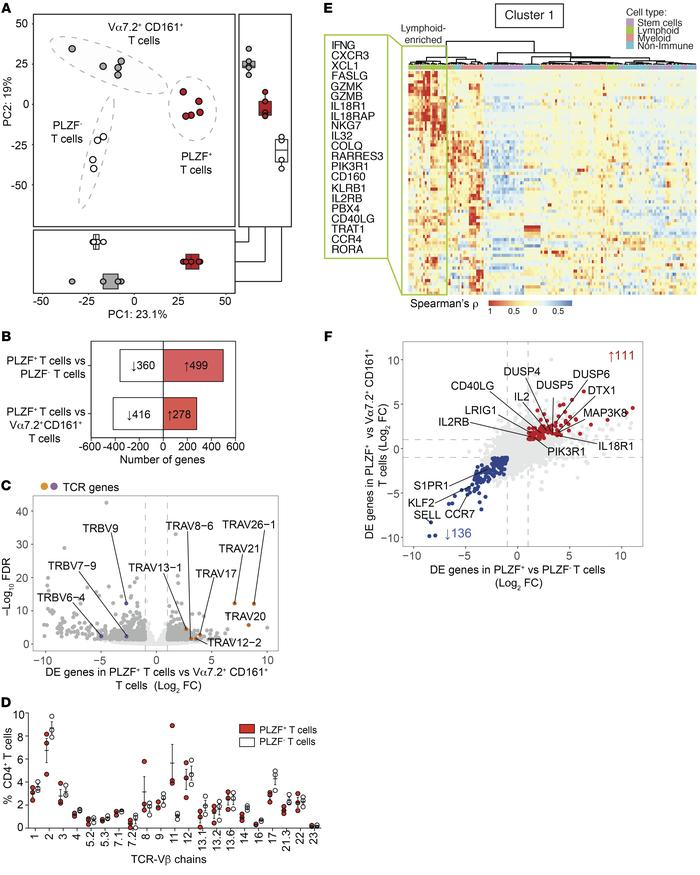 PLZF+CD4+ T cells are a transcriptionally distinct population of intesti...