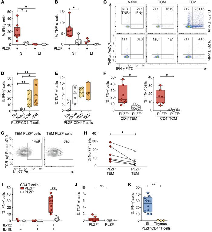 PLZF+CD4+ T cells produce cytokines in response to both TCR-dependent an...
