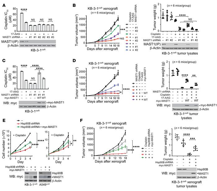 Inhibition of hsp90B sensitizes cisplatin-resistant cancer cells to cisp...