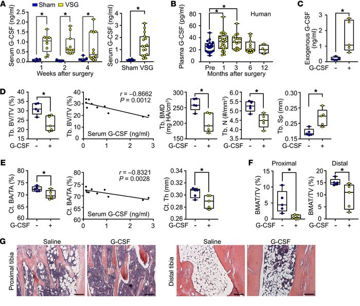 VSG in mice and humans rapidly increases circulating G-CSF, which in mic...