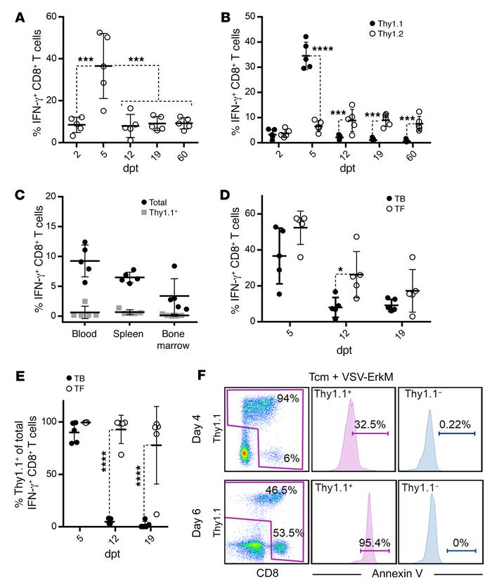 Expansion and persistence of ErkM-reactive CD8+ T cells are influenced b...