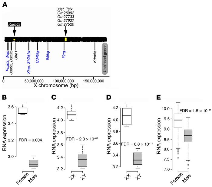 Differentially expressed X chromosome genes in mouse CD4+ T cells. (A) U...