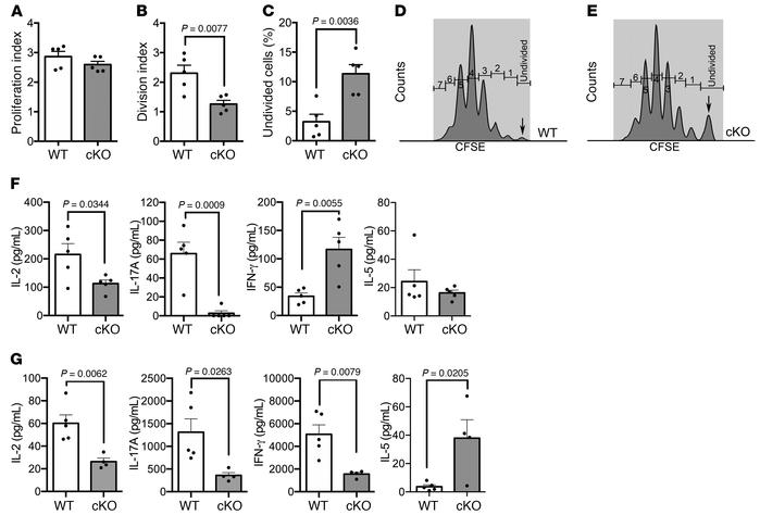 T cell proliferation and cytokine production in Kdm6a cKO and WT mice. (...
