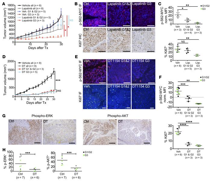 Subtype-specific responses to therapy are overcome by MYC-targeted agent...