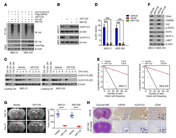 Pharmacological inhibition of USP9X attenuates the tumor-initiating abil...