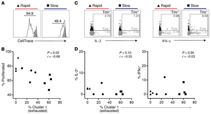 Islet-specific CD8+ T cells with an abundant cluster 1 (exhausted) pheno...