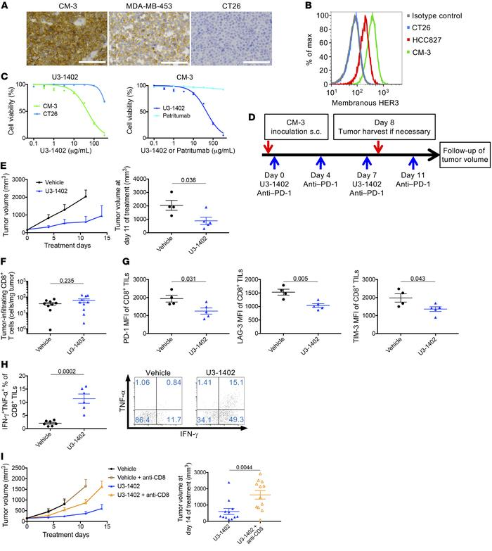 U3-1402 exhibits HER3-dependent cytotoxicity and improves CD8+ TILs func...