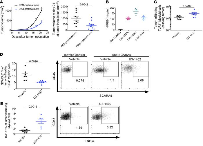 DXd causes HMGB-1 release and immune activation with damaged cancer cell...