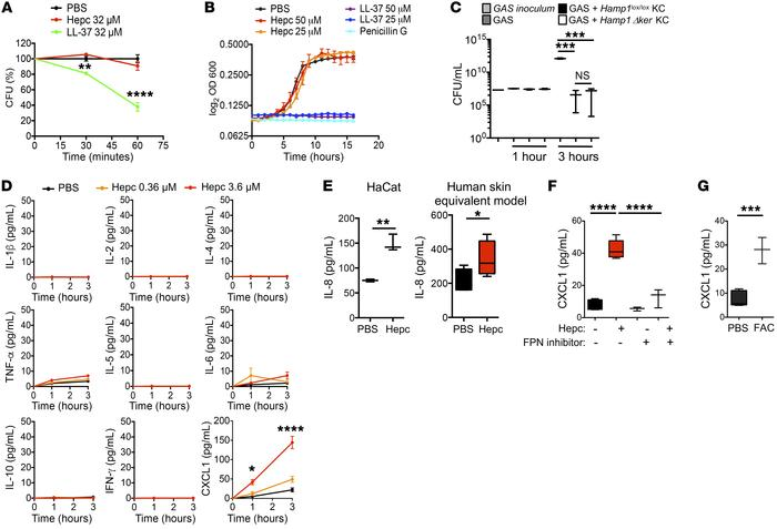 Hepcidin promotes CXCL1 production by keratinocytes. (A) GAS killing kin...