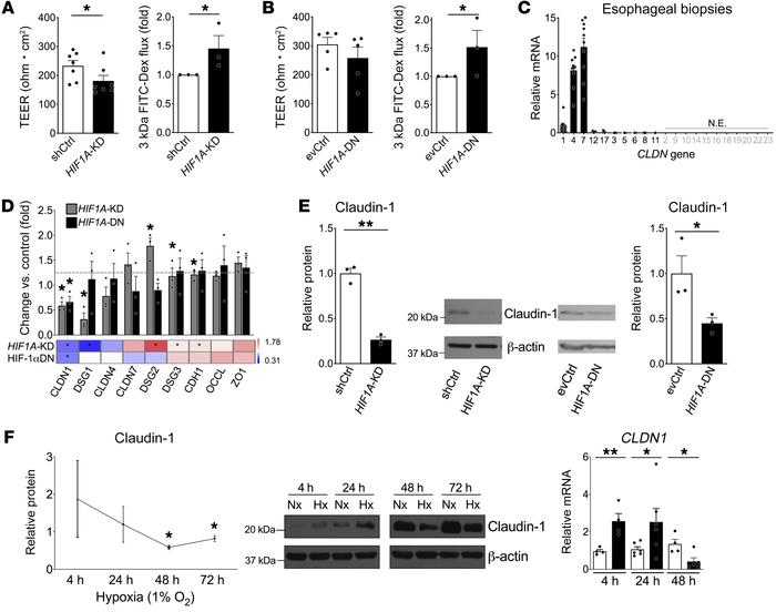 HIF-1α attenuation mediates esophageal epithelial barrier dysfunction an...