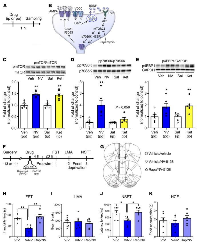 Antidepressant actions of NV-5138 are dependent on activation of mTORC1 ...