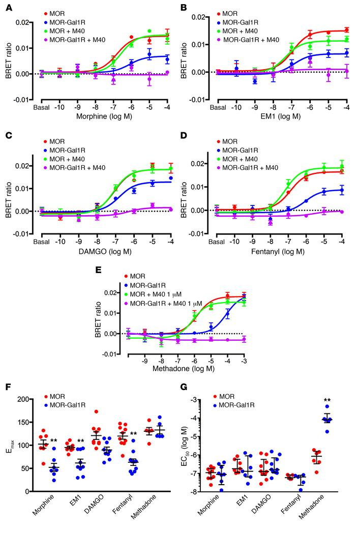 Gal1R-dependent pharmacodynamic differences of MOR agonists. (A–E) Repre...