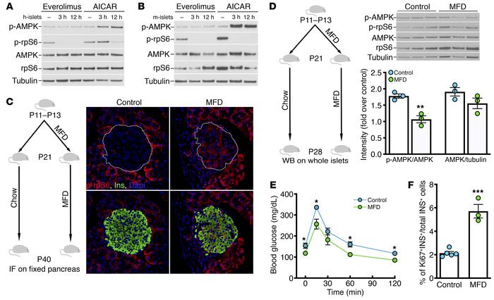 Weaning from maternal milk induces the switch from mTORC1 to AMPK signal...