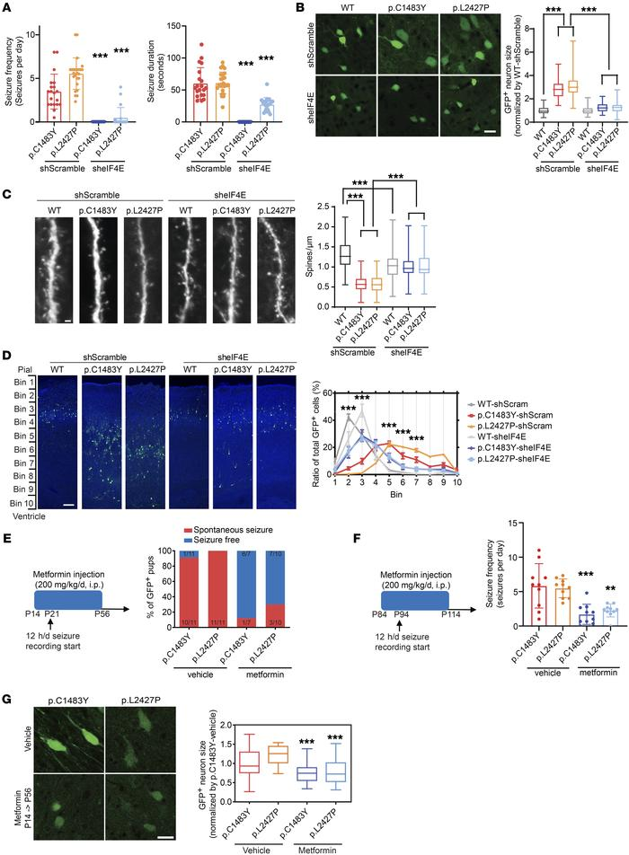 Pharmacological or genetic inhibition of eIF4E rescues intractable epile...