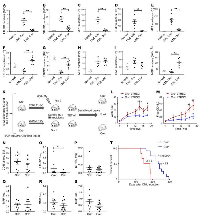 Mx1-Cre–mediated SIRT1 deletion inhibits CML stem and progenitor cells. ...