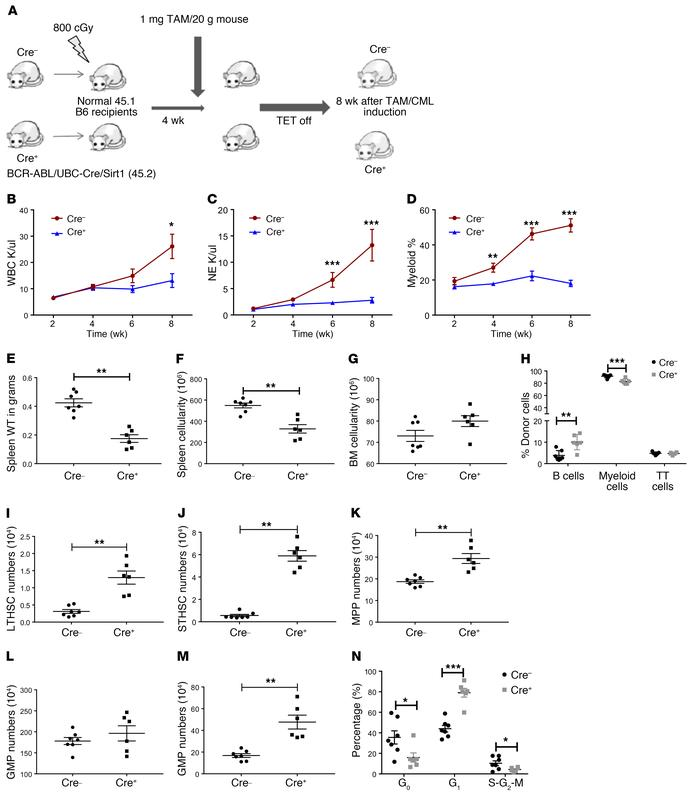 UBC ERT2-Cre–mediated SIRT1 deletion inhibits CML hematopoiesis. (A) Exp...
