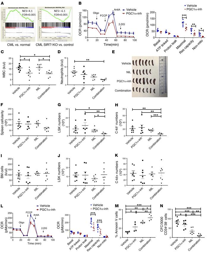 PGC-1α regulates mitochondrial metabolism and contributes to TKI resista...