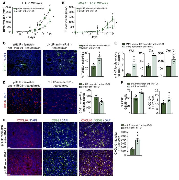 Targeting macrophage miR-21 leads to improved T-cell responses and decre...