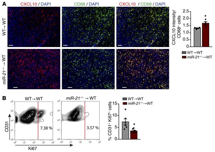 miR-21 deletion in TAMs leads decreased angiogenesis via increase of CXC...