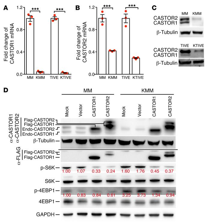 Latent KSHV infection activates mTORC1 by downregulating CASTOR1 and CAS...
