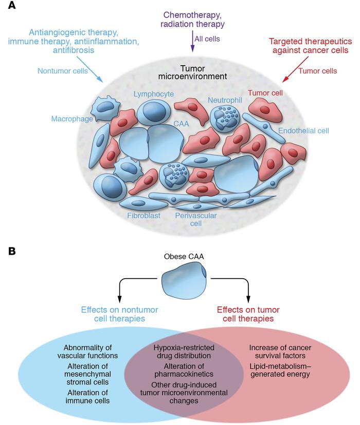 Mechanistic principles underlying cancer treatment and obesity-associate...