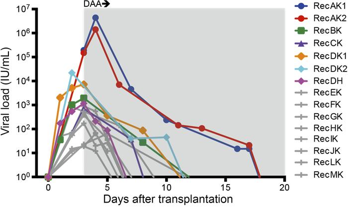 Plasma HCV kinetics in organ transplant recipients. Anti-HCV DAA therapy...