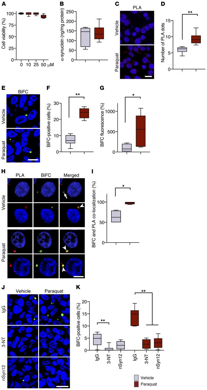Cell-to-cell hα-synuclein exchange is promoted by oxidative stress in vi...