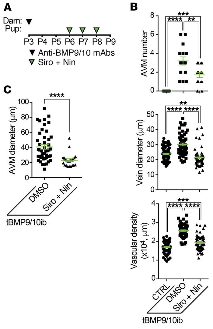Siro + Nin reverses retinal vascular pathology in tBMP9/10ib mice. (A) S...