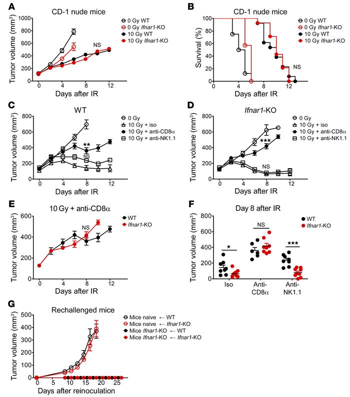 The enhanced response of Ifnar1-KO tumors to IR is mediated by CD8+ T ce...