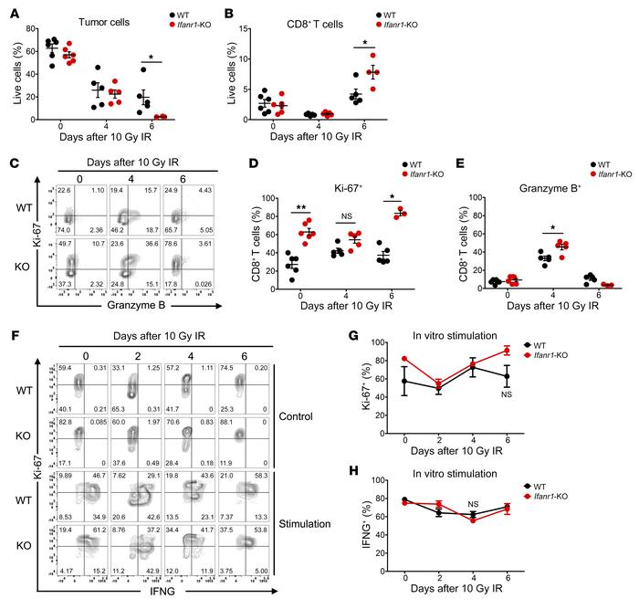 Characterization of infiltrating CD8+ T cells from Ifnar1-KO and WT MC38...