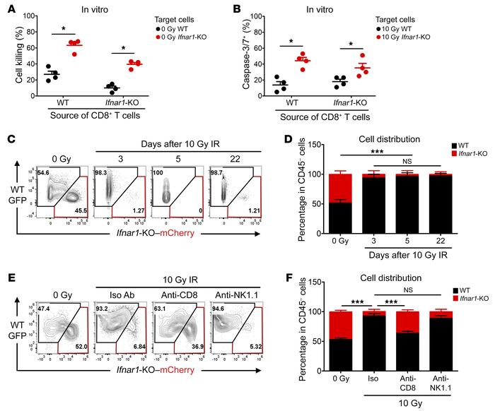 Ifnar1-KO MC38 tumor cells are more susceptible to CD8+ T cell–mediated...
