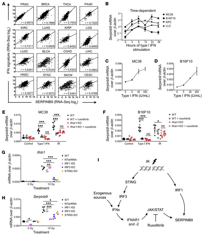Serpinb9 is induced by type I IFN signaling in cancer cells. (A) The co...