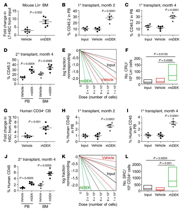 Recombinant DEK enhances ex vivo expansion of mouse Lin– BM and human CD...