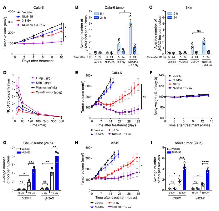 NU5455 preferentially augments radiotherapy in subcutaneous Calu-6 and A...