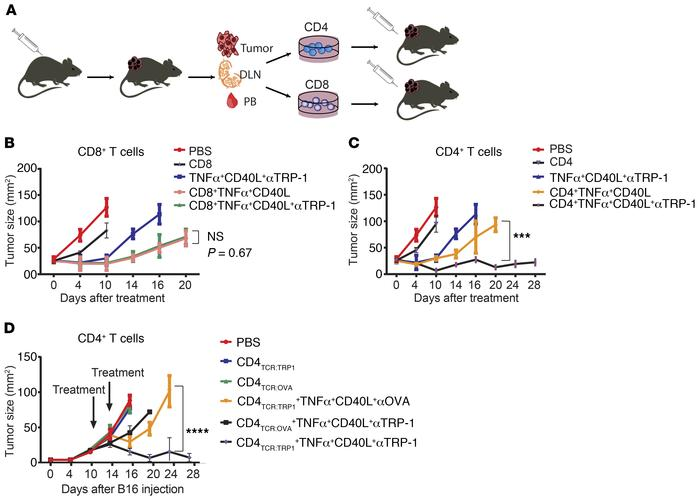 Adoptive transfer of CD4+ T cells with tumor-binding antibodies induces ...