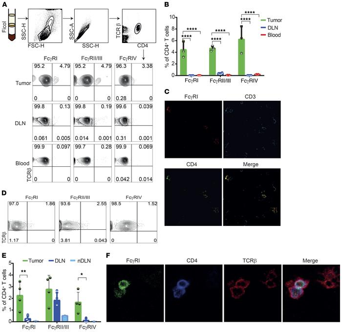 A small subset of tumor-infiltrating CD4+ T cells expresses Fcγ receptor...