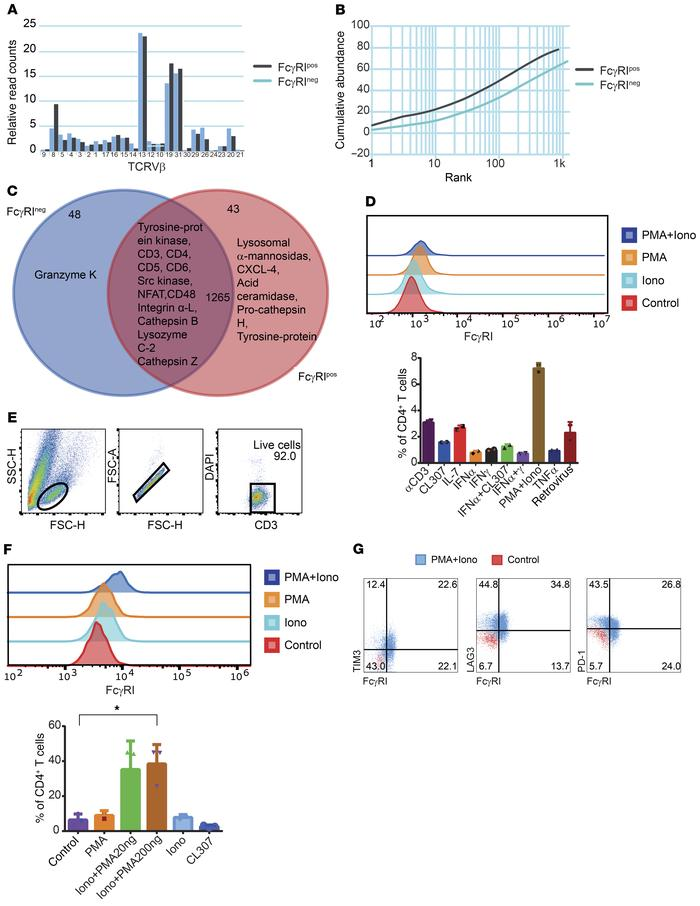FcγRI is expressed on exhausted CD4+ T cells and can be utilized to indu...