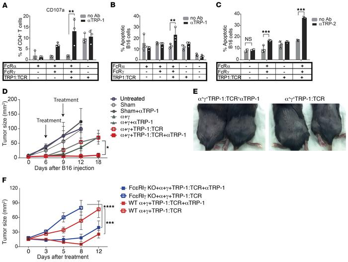 Ectopic expression of FcγRI in canonical T cells endows cytotoxic activi...