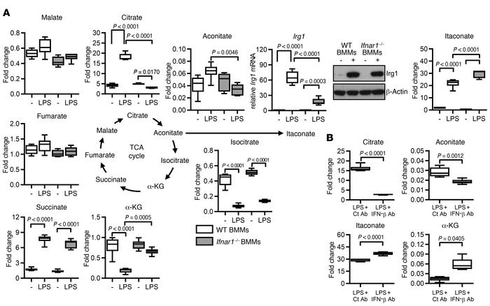 Autocrine type I IFN promotes TCA cycle fragmentation and citrate accumu...