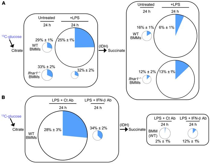 Autocrine type I IFN controls carbon flow through IDH in LPS-treated mac...